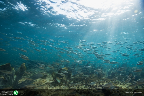 School of silversides near Maria Island, part of the Pointe Sables Environmental Protection Area (PSEPA), which is part of the Conservancy's Eastern Caribbean Marine Managed Areas Network project.